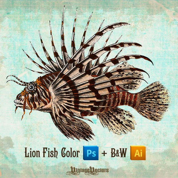 Vector Art of Lionfish (Lion Fish) Vector and Color Photo Illustration