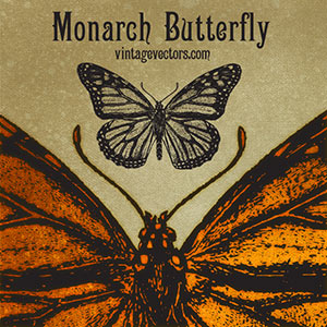 Monarch Butterfly Vector - free vector art