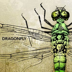 Vector art of green dragonfly