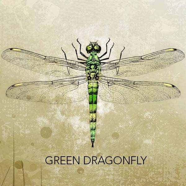 Vector Art Green Dragonfly Vintage Vectors